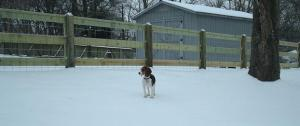 Piper in the snow with the new fence.