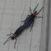 lovebug2