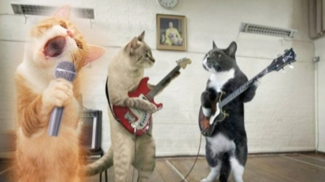 the band purry final 2