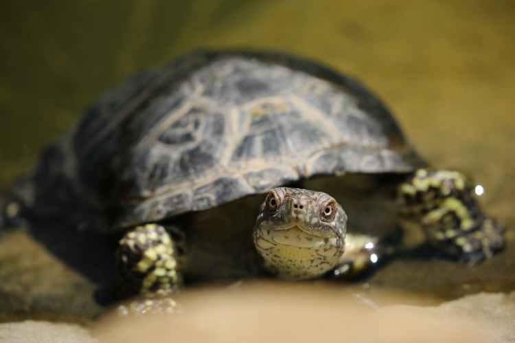 animal turtle tortoise depth of field